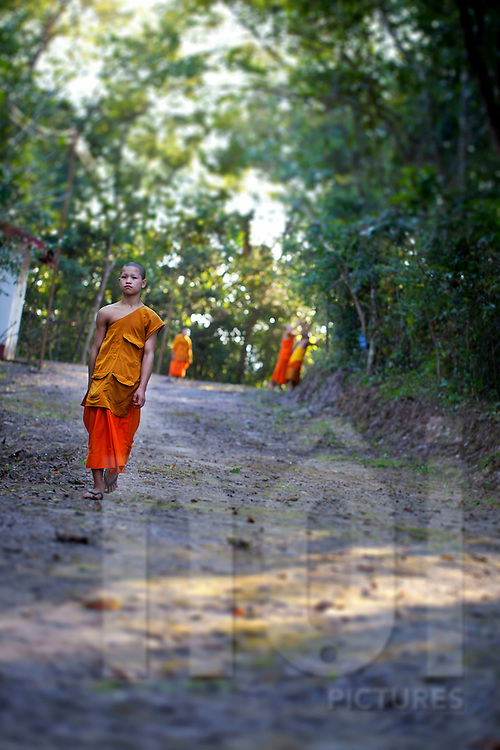 A young monk walks in a forest