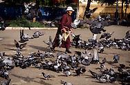 Mongolia. Ulaanbaatar. Gandan Buddhist Monastery, pigeons  Oulan Bator       / Gandan monastere , pigeons  Oulan Bator  Mongolie   / R87/199    L0006184  /  P0007422