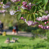 UK Weather: Spring sunshine in Green park and St James Park