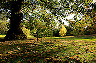 Fallen chestnuts around a bench in on an autumn day in Kew Gardens, London UK