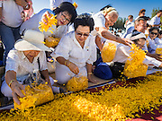 """02 JANUARY 2016 - KHLONG LUANG, PATHUM THANI, THAILAND: Women place marigolds of along the path monks will walk at Wat Phra Dhammakaya on the first day of the 5th annual Dhammachai Dhutanaga (a dhutanga is a """"wandering"""" and translated as pilgrimage). More than 1,300 monks are participating pilgrimage through central Thailand. The purpose of the pilgrimage is to pay homage to the Buddha, preserve Buddhist culture, welcome the new year, and """"develop virtuous Buddhist youth leaders."""" Wat Phra Dhammakaya is the largest Buddhist temple in Thailand and the center of the Dhammakaya movement, a Buddhist sect founded in the 1970s. The monks are using busses on some parts of the pilgrimage this year after complaints about traffic jams caused by the monks walking along main highways.          PHOTO BY JACK KURTZ"""