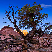 The long roots of shrubs and trees extend out far from their source in Arches National Park in Utah.