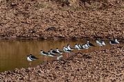 Wildlife Bird photography from Mount Trumbull Site Arizona, USA
