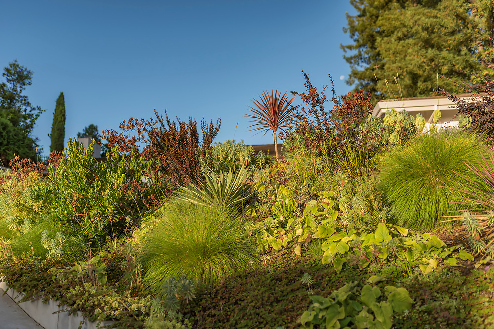 A garden designed by Margaret Baumgratz, Baumgratz Landscape Design. Garden's by Baumgratz Landscape and Design showing overall layout and individual plant combinations.