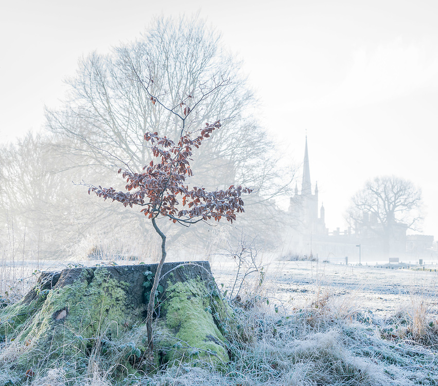 A tree sapling photographed with an early morning frost with Ashridge College in the background.