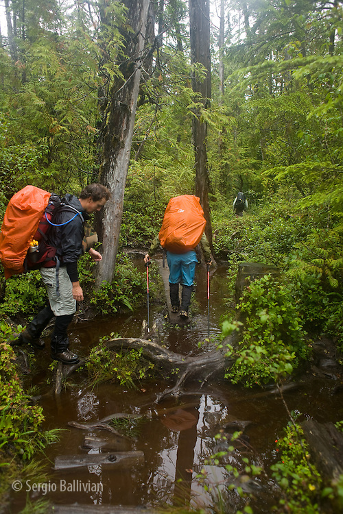 West Coast Trail - Day 6.  Trekkers navigate through mud, swamp and flooded trail through roots and slippery logs.