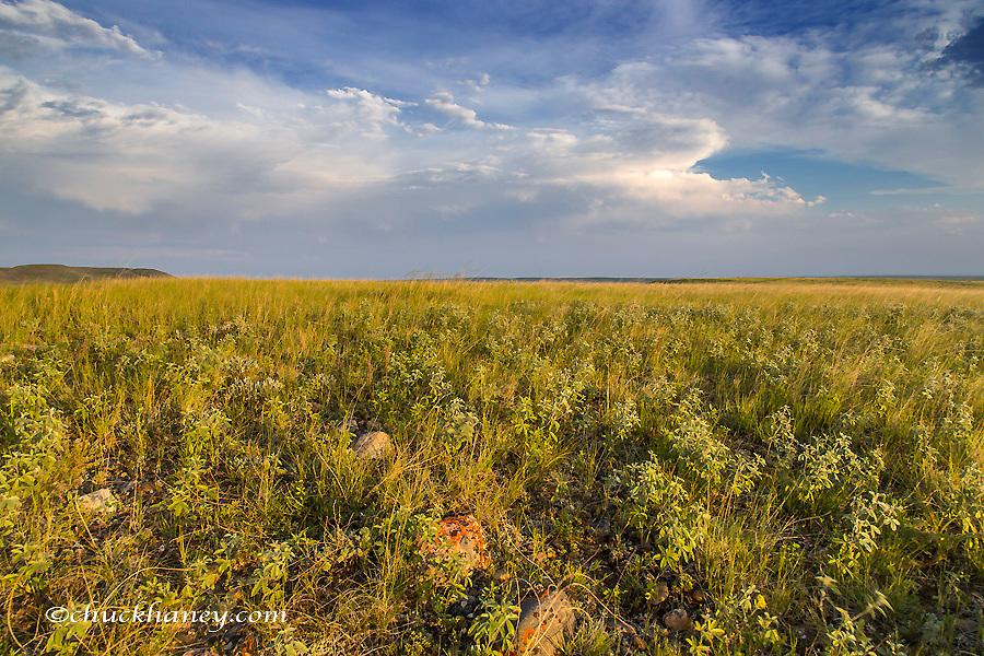 Shortgrass praire at the Bitter Creek Wilderness Study Area near Hinsdale, Montana, USA