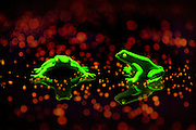 Glowing frogs surrounded by glowing crystals.Black light