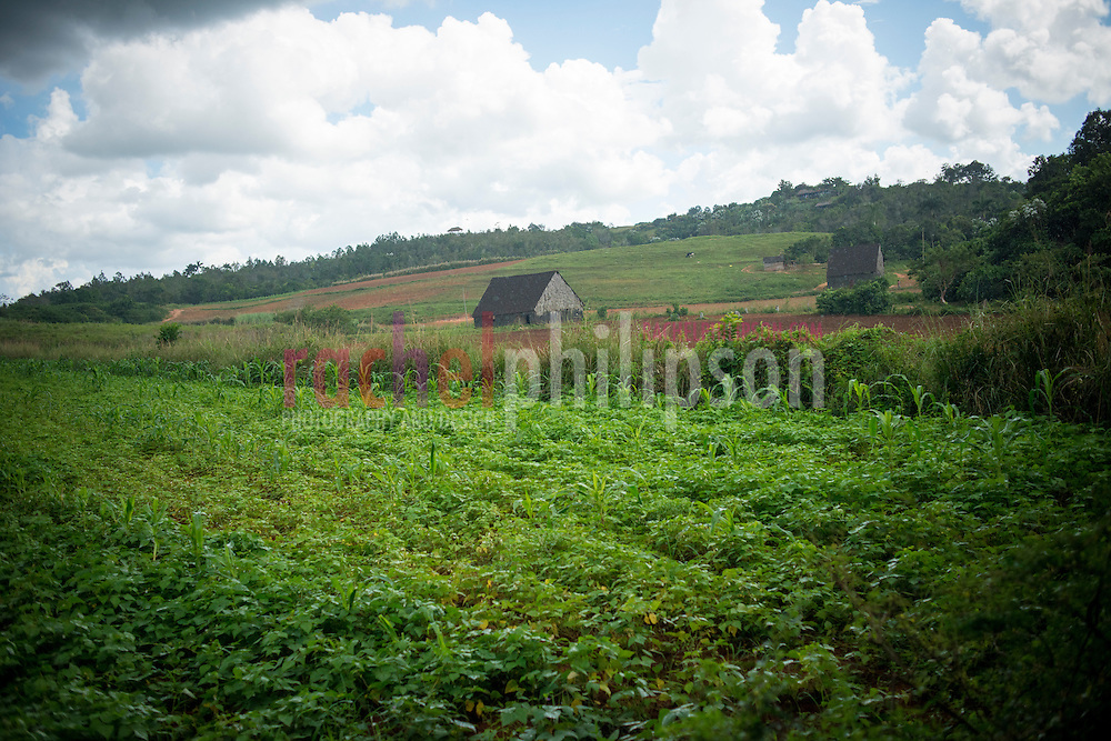 Cuba, Viñales, landscape, coffee farm, tobacco farm