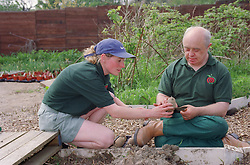 Man with Downs Syndrome and carer in garden planting potatoes,