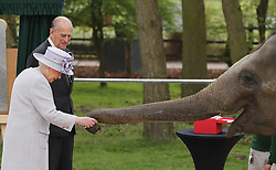 Queen Elizabeth II and the Duke of Edinburgh with an elephant at ZSL Whipsnade Zoo, where they officially opened the zoo's new Centre for Elephant Care as part of a visit to Bedfordshire.