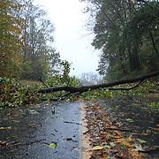 10/29/12 - Wilmington, DE - Hurricane Sandy -  A down tree and debris blocks Millcreek Rd, Near Crossgate Park Monday, Oct. 29, 2012, in Wilmington DE. ..SAQUAN STIMPSON/Special to The News Journal.