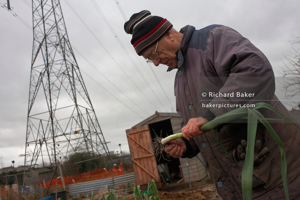 Pensioner Jim Burrows cuts leaks by his shed overlooked by a giant eletricity pylon at Leys Road allotments, East London.