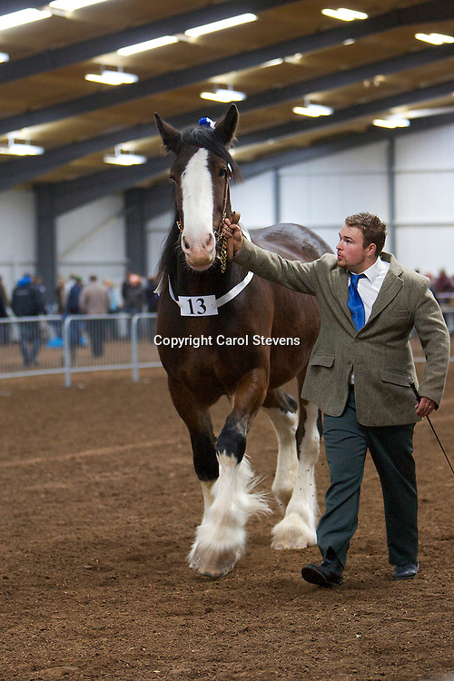 North West and Wales Shire Foal Society Show 2012 <br />