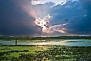 Sunset after a heavy downpour near walnut log, Reel Foot lake near Tiptonville, TN. Reel Foot Lake
