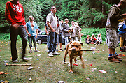 Dog carrying wooden stick, Wales, 2012