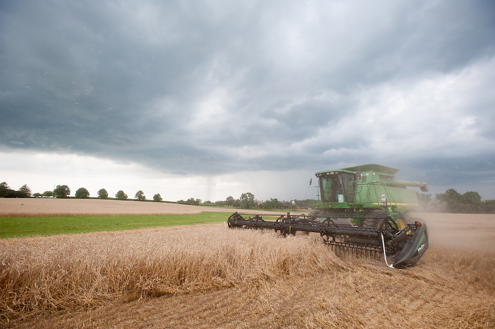 Wheat harvest with rain clouds