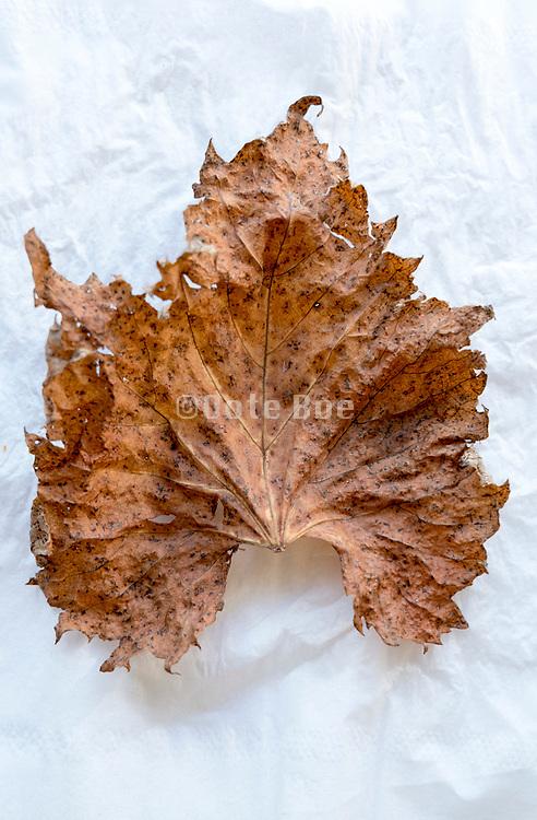 autumn leaf still life