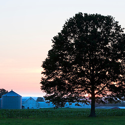 An oak tree at sunset in a field in Hadley, Massachusetts.