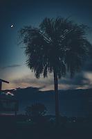 Palmetto Night
