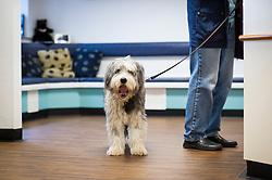 Pet dog arriving at reception, Rushcliffe Veterinary Centre, West Bridgford, Nottingham, UK.<br /> Photo: Ed Maynard<br /> 07976 239803<br /> www.edmaynard.com
