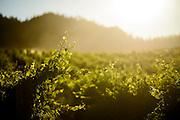 Sunrise, Black Sage Bench, Oliver BC