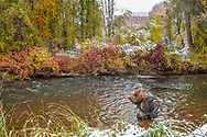Georgia resident Mason Sims, 16, fishes a stretch of the Frying Pan River near Basalt, Colorado during the U.S. National Fly Fishing Championship.