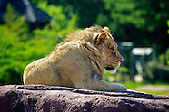Virginia Zoo Animals