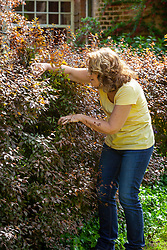 Checking for birds' nests before cutting a hedge