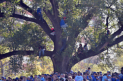 Nov 3, 2015; Kansas City, MO, USA; Several Kansas City Royals fans climb trees for a better view while waiting on players to arrive at Union Station. Mandatory Credit: Denny Medley-USA TODAY Sports