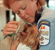 Lt. Laurie Klingerman tries to give oxygen to the Anglero's Yorkshire Terrier, Bambi, after it was found inside the burning home in Golden Gate Estates Sunday. Three dogs, including Bambi, were rescued from the house. Samanda Dorger/Staff
