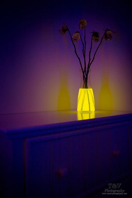 Dying flowers in a vase with glowing water. Blacklight photography.