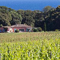 Un an dans la vigne. The story of a french grapewine. Part.2