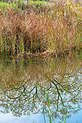 trees and plants reflect in a calm and still water pond