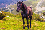 Black horse with a lightning spot on the head