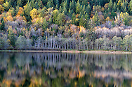 """Fall foliage colours reflect on the surface of Deer Lake in Sasquatch Provincial Park near Harrison Hot Springs, British Columbia, Canada. Photographed from """"The Point"""" at Deer Lake near the Bench Campground."""