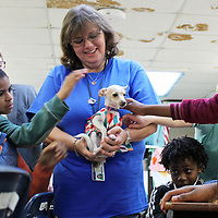 Belle-Shivers Middle School teacher Angelia Goode walks with her service dog, Sweetie, in her classroom. The puppy has helped increase student's moods and grades.