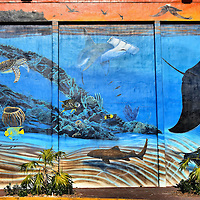 """Florida's Living Reef Mural by Robert Wyland in Key West, Florida<br /> I have always been a huge fan of Robert Wyland's series of marine murals around the world.  So I was excited to experience the """"Florida's Living Reef"""" in Key West.  Number 52 out of 100, this enormous image featuring a stingray, hammerhead shark and coral was created at 201 William Street in 1993 and then repainted in 2012. His partner on this project was Guy Harvey. All of his outdoor art is donated by the Wyland Foundation."""