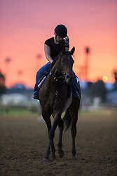 Horses leave the track during workouts Friday, May 03, 2013 at Churchill Downs in Louisville. Photo by Jonathan Palmer