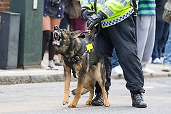 © Licensed to London News Pictures . 07/09/2013 . London , UK . Police with dogs controlled the march . The EDL hold a march and demonstration in London today (Saturday 7th September 2013) . Photo credit : Joel Goodman/LNP