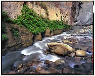 Zion National Park, UT 11/2/2015<br /> Ferns in The Narrows<br /> f/22, 50 second exposure on Kodak Ektar film<br /> Alex Jones / www.alexjonesphoto.com
