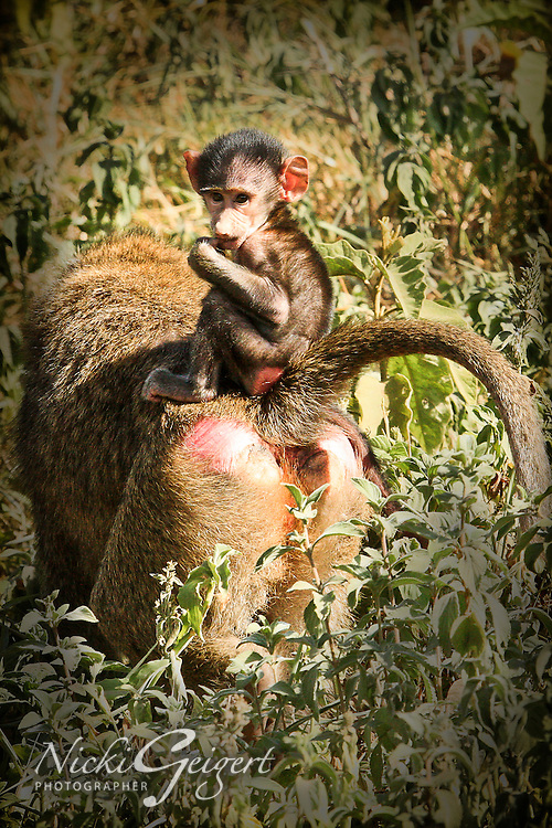 Animals, monkey, baby.<br />