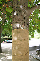 Wrapped tree trunk in Madrid's Botanic gardens