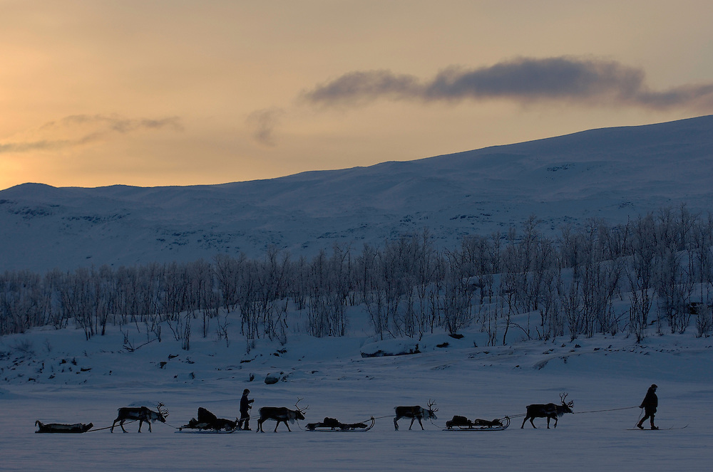 Reindeer sledding ecotourism expedition, Stora Sjofallet N.P, Laponia World Heritage Area, Lapland, Sweden.