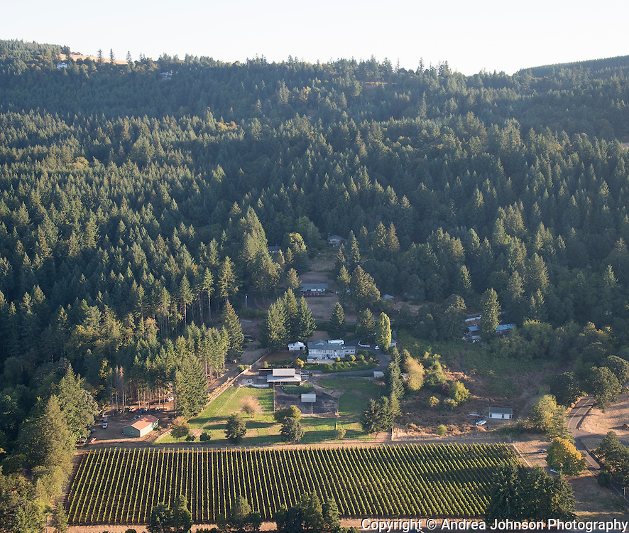 Raindance vineyard, Chehalem Mountain AVA, Willamette Valley, Newberg vineyard, Chehalem Mountain AVA, Willamette Valley, Newberg