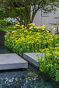 The Telegraph Garden by Marcus Barnett - RHS Chelsea Flower Show, Chelsea Hospital, London UK, 18 May 2015. Guy Bell, 07771 786236, guy@gbphotos.com