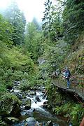 Naturpark Südschwarzwald ..Hinterzarten, Ravennaschlucht, Gebirgsbach