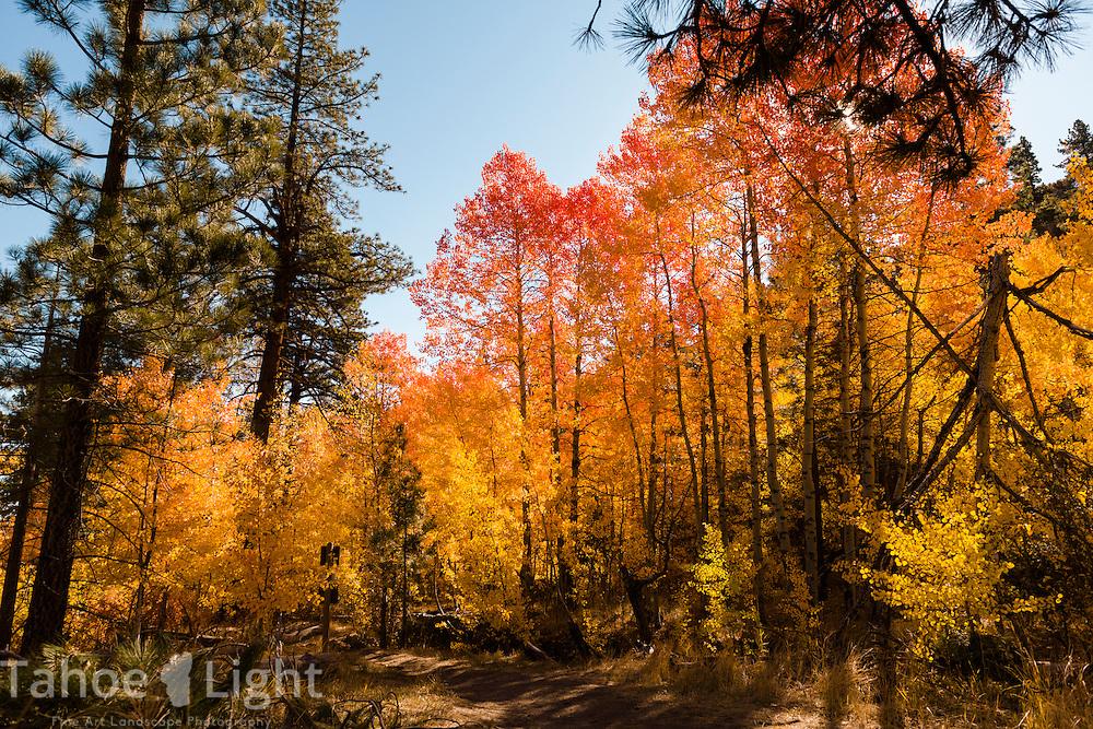 Fall colors in Reno