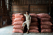Owner of a Garlic warehouse and distribution centre. Tar Yaw Village.