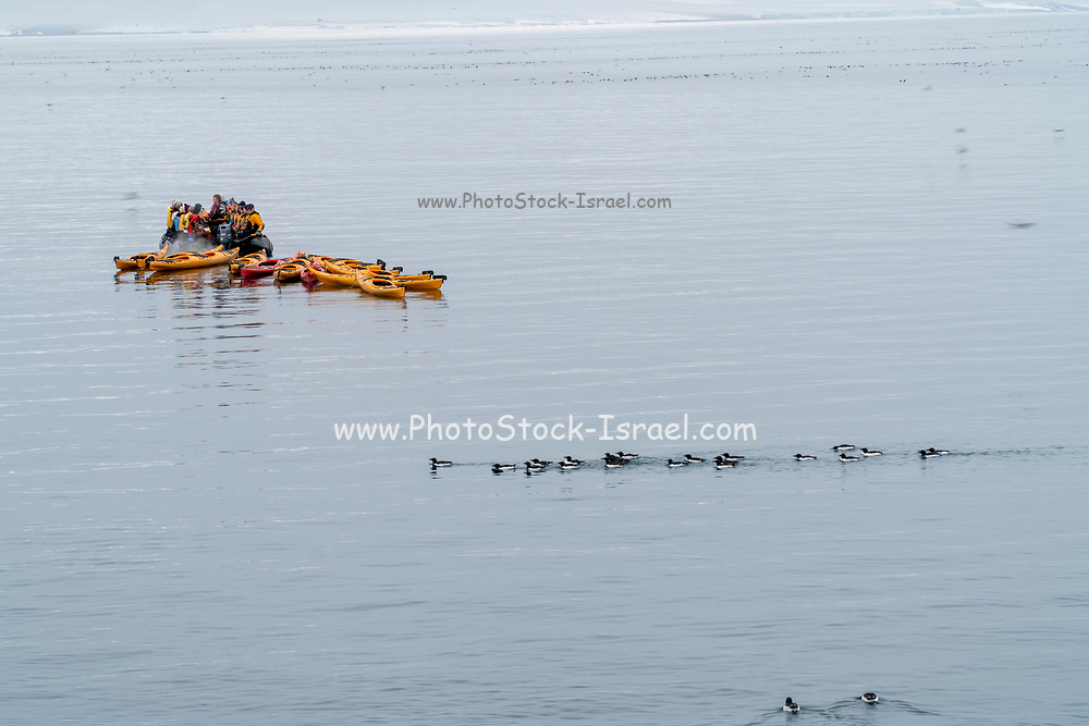 Adventure tourism. Kayaks are ready for tourists to paddle round icebergs in arctic ocean, Spitsbergen, Norway in July